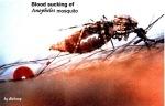 Peringatan Hari Malaria Sedunia 25 April 2011